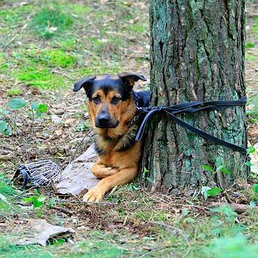 Świnoujście - iswinoujscie.pl » Pies przywiązany do drzewa ...