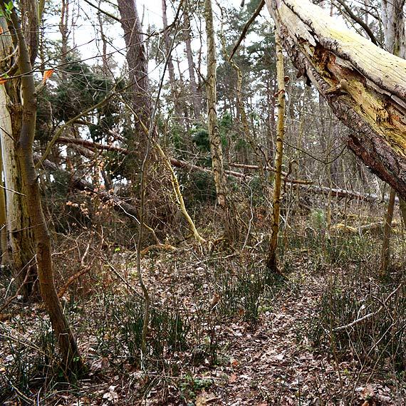 Czytelnik: Nie tak powinien wyglądać las tuż przy przeprawie promowej Karsibór