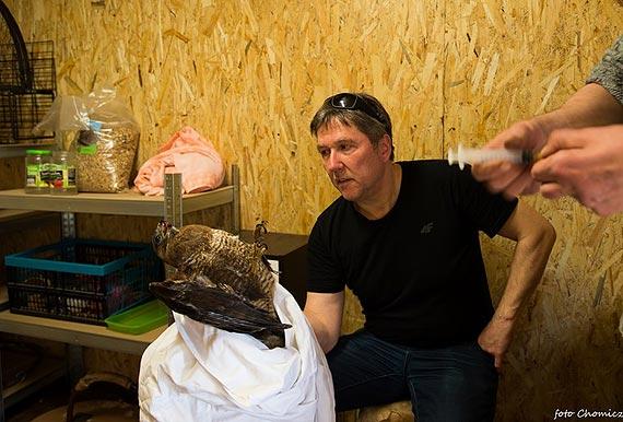 Uratowali rannego myszołowa. To kolejny ptak, któremu pomogli ludzie