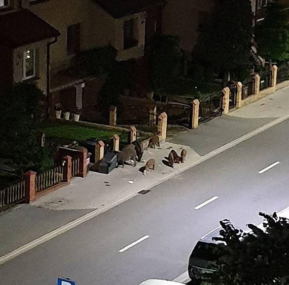 Późna kolacja na ulicy Markiewicza