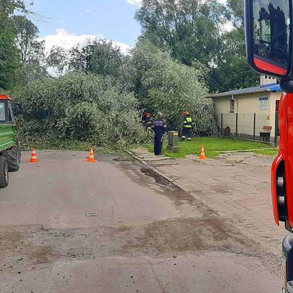 Na ulicę Steyera runęło potężne drzewo