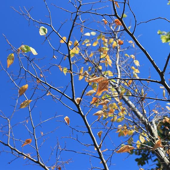 Kolejne drzewka wołają o pomoc! Czy już uschły?