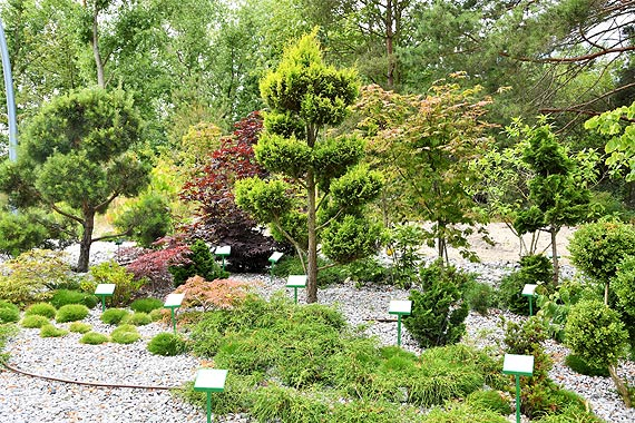 75 gatunków roślin w Ogrodzie Sensorycznym na promenadzie