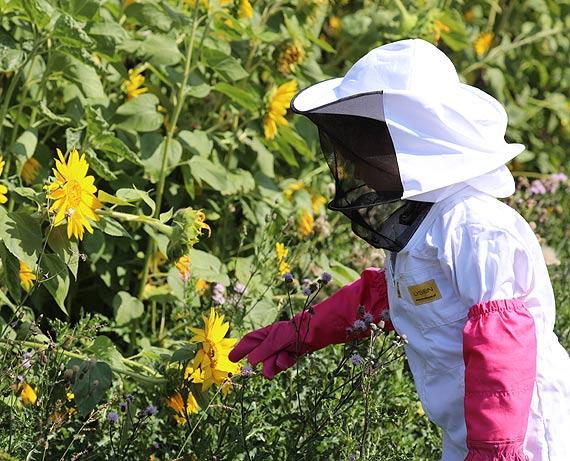 W Polsce Wielki Dzień Pszczół