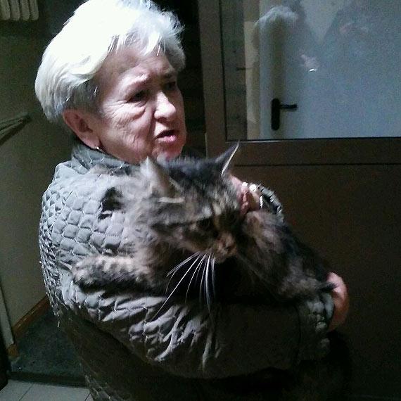 Kot norweski błąka się bez opieki. Szukamy właściciela