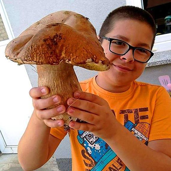 Taaaaki okaz! 0,5 kg prawdziwka w grzybie