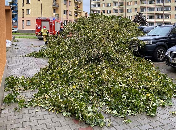 Uważajcie na siebie jest naprawdę niebezpiecznie! Na Witosa drzewo spadło na chodnik