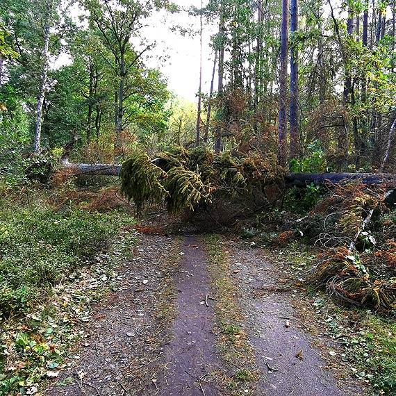 Czytelnik: Zwalone drzewa na szlaku pieszo-rowerowym R10