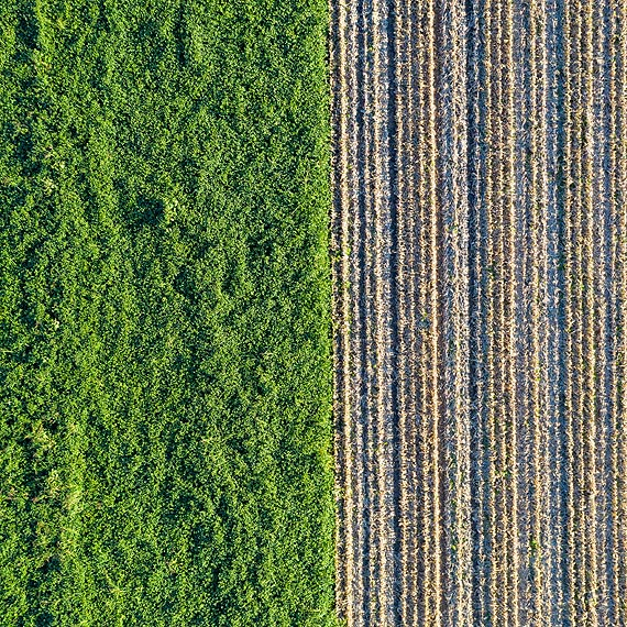 Zmiany na rynku biomasy
