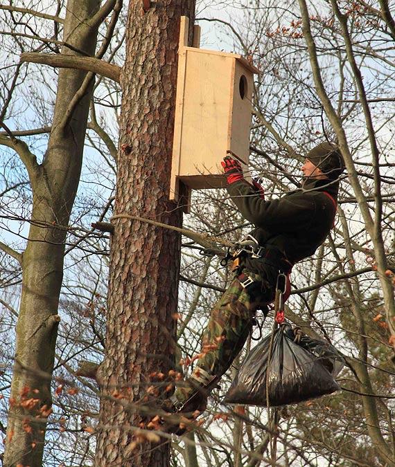 Sprzątanie i wywieszanie skrzynek lęgowych dla ptaków i nietoperzy na terenie RDLP w Szczecinie