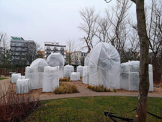 """Gdzie zniknął namiot """"igloo"""" chroniący cenne rośliny?!"""
