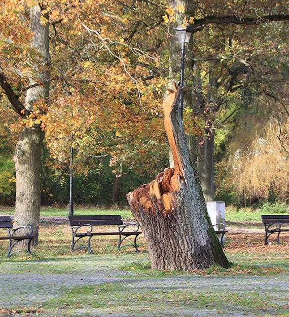 Zniszczone wichurą pozostałości drzewa już prawie rok czekają na uprzątnięcie!