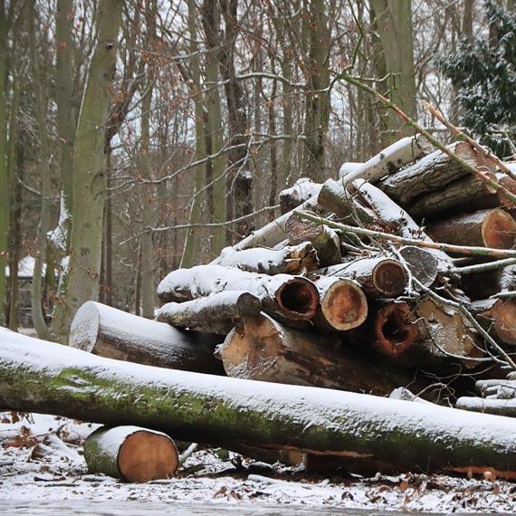 Gdzie trafiają połamane przez wiatr drzewa? Ręka do góry kto wie!