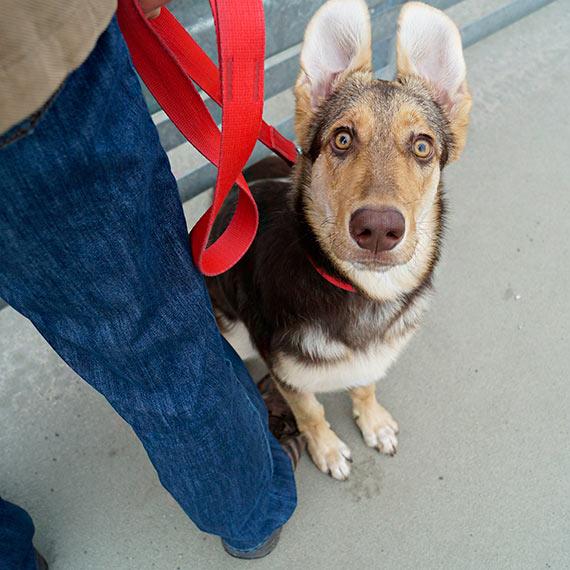 Twój pies biega bez smyczy? Od 10 kwietnia możesz dostać wysoki mandat!