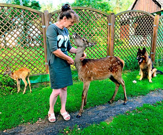 Ośrodek Rehabilitacji dla Dzikich Zwierząt w Warnowie wznawia działalność!