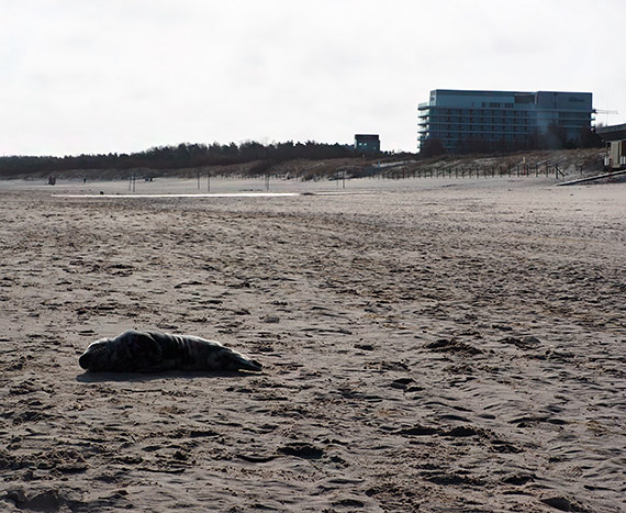 Niecodzienny gość na świnoujskiej plaży