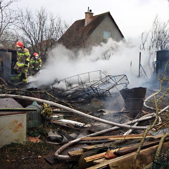 Pożar na działkach. Ogień strawił gołębnik, było zagrożenie, że spłonie także kurnik!