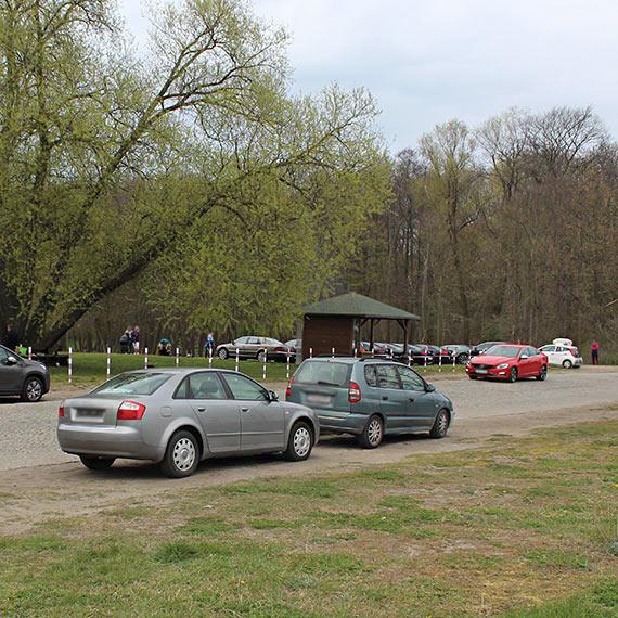 """Stęsknieni za rekreacją w plenerze goście ruszyli na świnoujską """"zieloną trawkę""""! Urokliwe zakątki parku zasłoniły karoserie aut"""