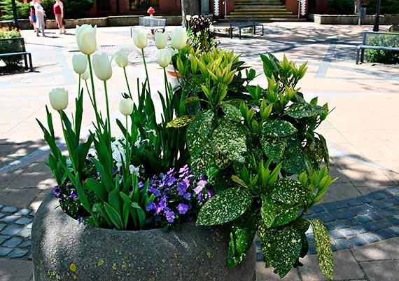 Za moment przyjdzie lato. Świnoujście utonie w kwiatach i zieleni