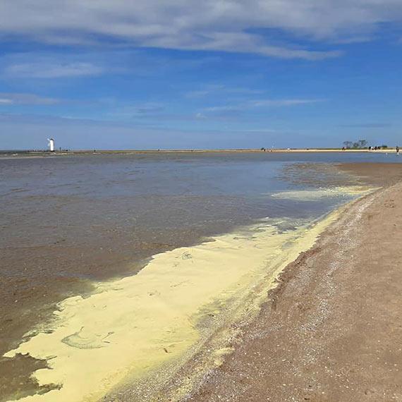 Żółty osad na wodach Bałtyku