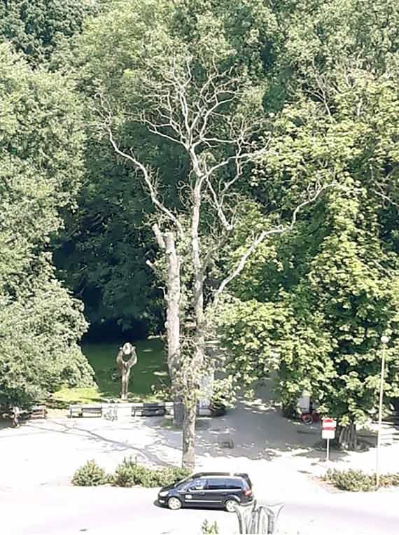 Uschnięte drzewo wita wchodzących do Parku Zdrojowego
