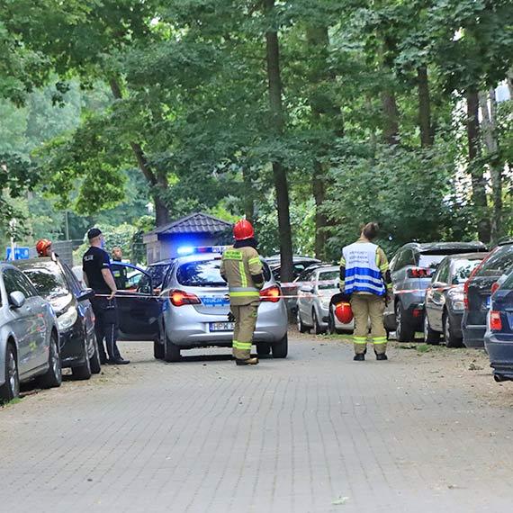 Złamane drzewo pochyliło się nad zaparkowanymi samochodami