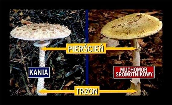 Zalety i zagrożenia związane z grzybobraniem