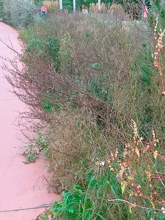 Czytelniczka: Droga ciernistych krzewów [1]