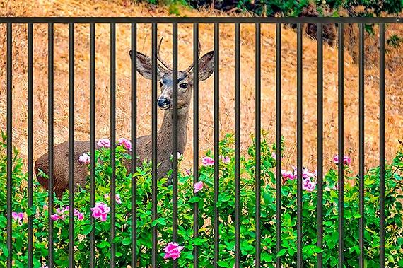 Ogrodzenie a dzikie zwierzęta